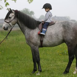 Compositi - Etrier Matrix poney